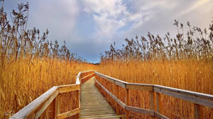 Walk through the reeds by Pajunen