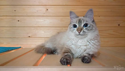Sauna Cat by Pajunen