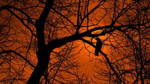 Crow Tree Silhouette by Pajunen