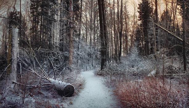 Path of the Fallen Trees II