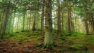 Trees Around Us