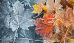 Frozen Leaves by Pajunen