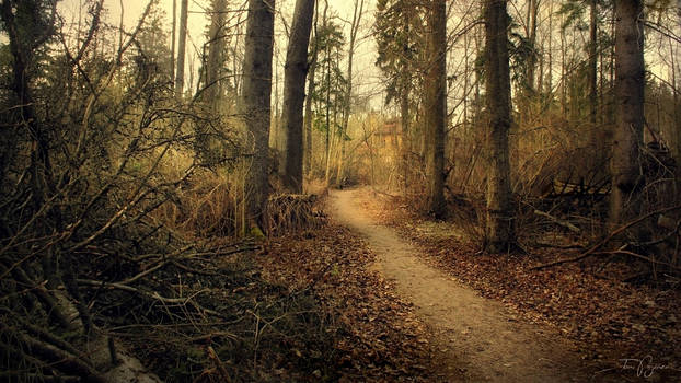 Path of the Fallen Trees III