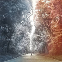 The Road of Life by Pajunen