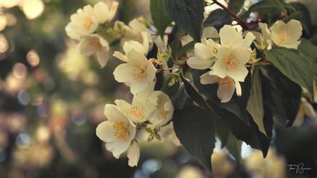 Blossoms II