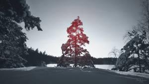Below Zero Tree by Pajunen