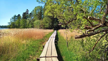 Summery trail to the island