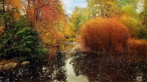 October Park by Pajunen