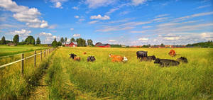 Cows in the pasture by Pajunen