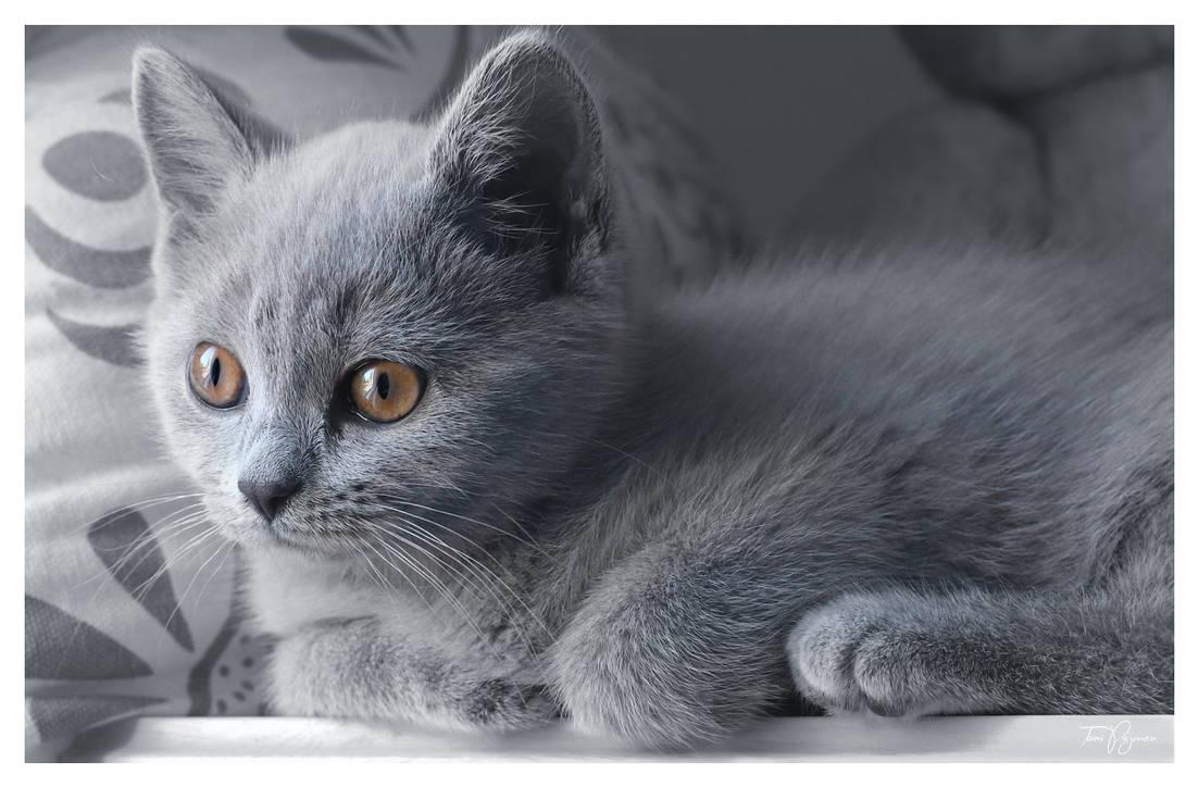 Aino the cat by Pajunen
