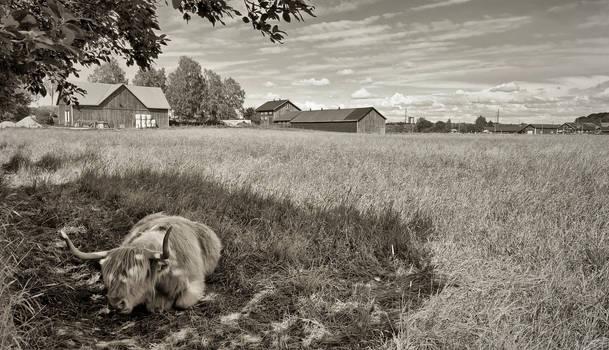 Rural Helsinki II