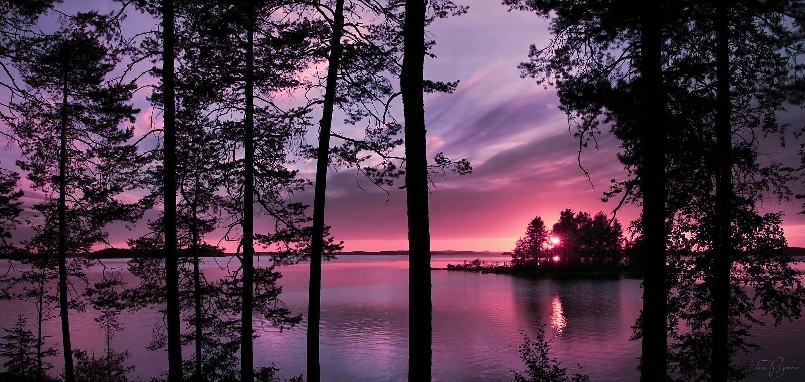 Trees' silhouettes II