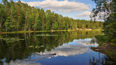 Forest Lake by Pajunen