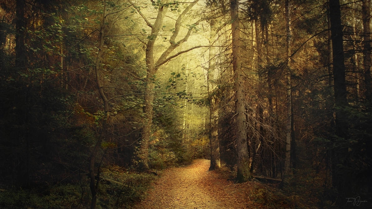 In the woods by Pajunen