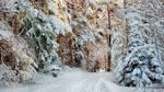 Snowy December