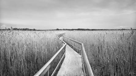 The Path IV by Pajunen