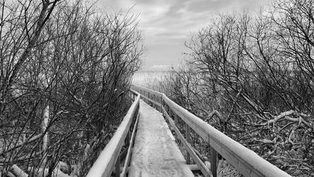 The Path V by Pajunen