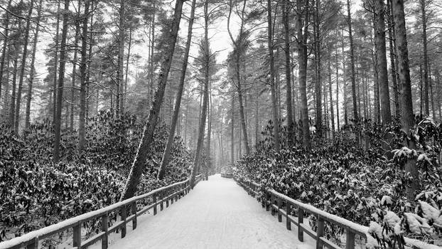 Rhododendron park in winter