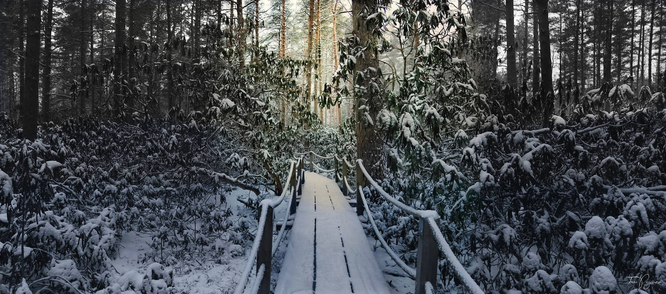 Rhododendron park in winter II by Pajunen