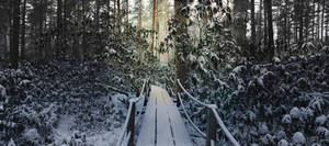 Rhododendron park in winter II