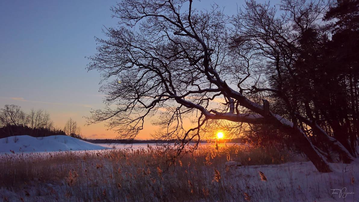 Winter Evening by Pajunen
