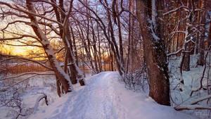 Snowy path by the seashore