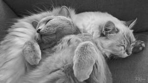 Cat pillow by Pajunen