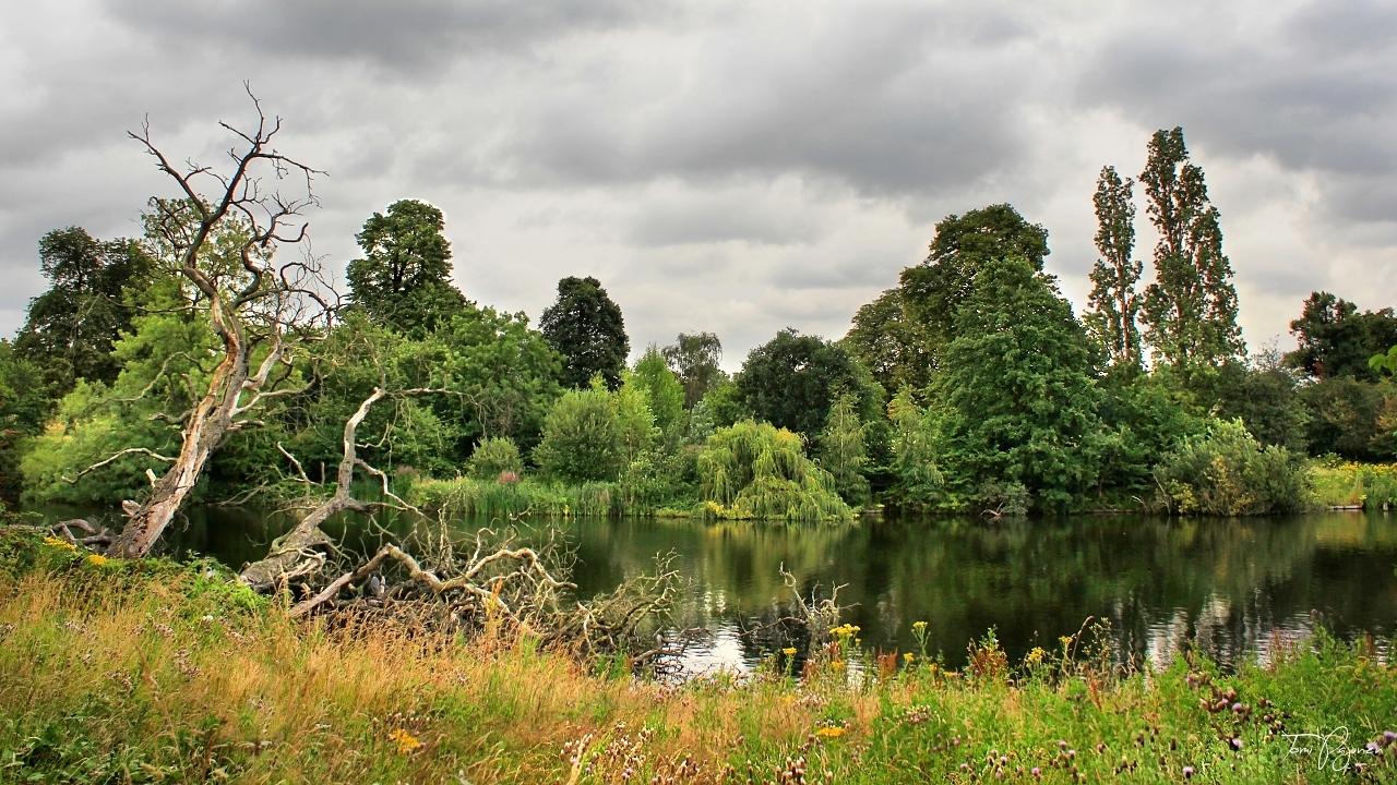 Hyde Park London by Pajunen