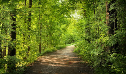 Forest Trail by Pajunen