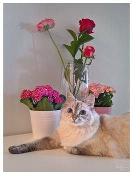 Maisa with flowers