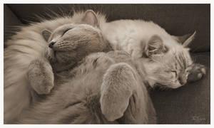 Cat Pillow II