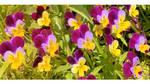 Summer flowers by Pajunen