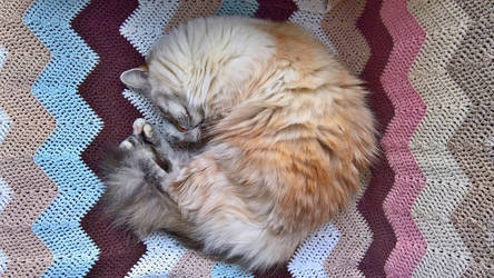 Maisa sleeping