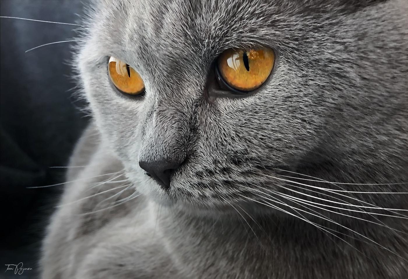 Aino the Cat