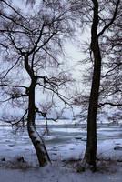 Trees on the seashore
