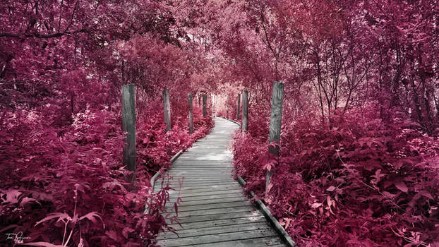 Path Through the Crimson Forest