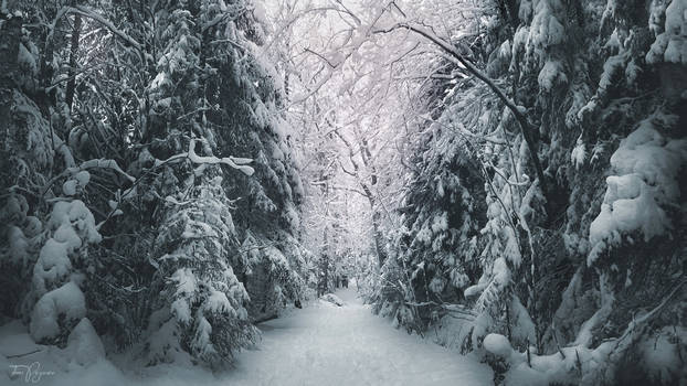 Path through the snowy forest