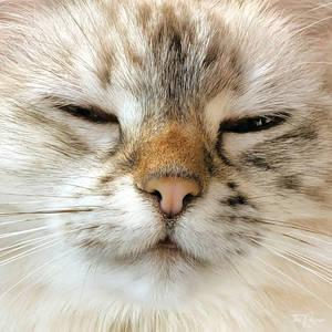 Cat Eastwood