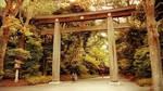 Meiji shrine torii