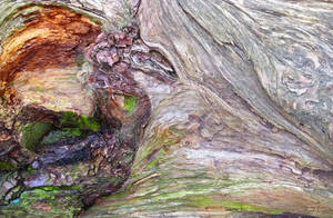 WoodDragon