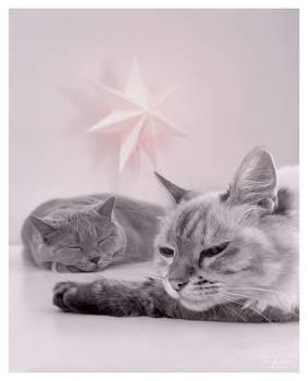 Sleeping Under the Star