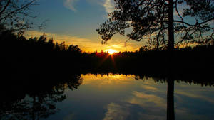 Forest lake sunset