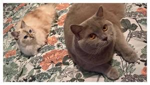 Maisa and Aino