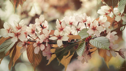 A blooming tree