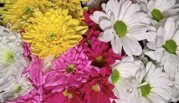 Name Day Flowers
