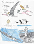 Pterosaurs of the Phosphates - Tethydraco