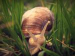 Mr. Snail by sylffkaaa