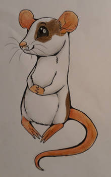 [G] Mousey (Hospial sketch #4)