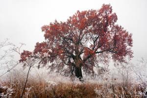 Frozen Mist by gummaid