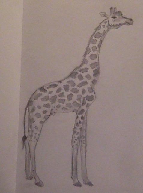 Giraffe by lauren-dawn